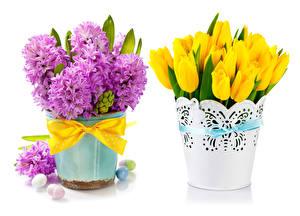 Картинки Праздники Пасха Тюльпаны Гиацинты Белый фон Бантик