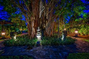 Обои Индонезия Парки Тропики Скульптуры Ночь Ствол дерева Bali Природа