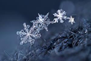 Фотография Макро Снежинки