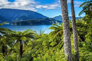 Обои Новая Зеландия Горы Озеро Ствол дерева Elaine Bay Marlborough Природа