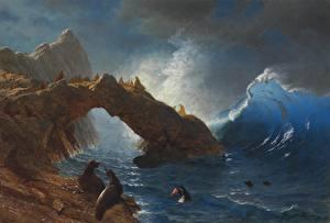 Картинка Живопись Берег Тюлени Albert Bierstadt, Seals on the Rocks
