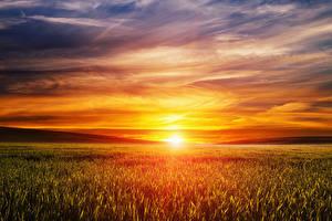 Фото Пейзаж Рассветы и закаты Поля Небо Солнце Природа