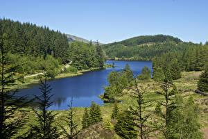 Картинка Шотландия Озеро Леса Ель Loch Drunkie Природа