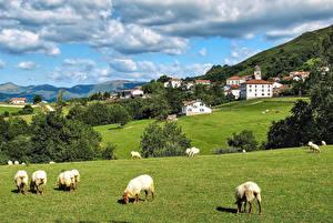 Картинки Испания Здания Луга Овцы Облака Zugarramurdi Navarre