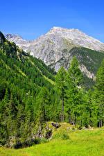 Картинка Швейцария Горы Леса Альпы Деревья