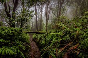 Фото Тропики Леса Кусты Деревья Тропинка