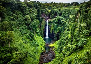 Фотографии Тропики Водопады Скала Кусты Samoa