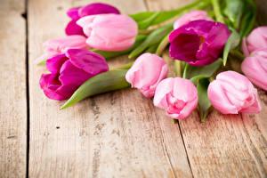 Фотография Тюльпаны Вблизи Доски Цветы