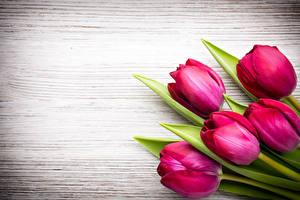 Картинка Тюльпаны Вблизи Доски Шаблон поздравительной открытки Бордовый Цветы