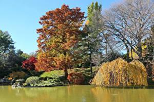 Обои США Сады Пруд Осенние Деревья Кусты Brooklyn Botanic Garden Природа
