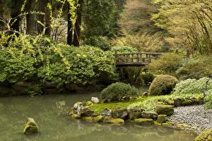 Обои США Парки Пруд Мосты Камень Мох Кусты Portland Japanese Gardens Oregon Природа