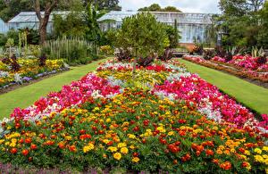 Обои Великобритания Сады Бархатцы Флоксы Swansea Botanic Gardens Wales