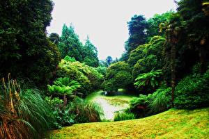 Картинка Великобритания Парки Пруд Деревья Пальмы Кусты Lost Gardens of Heligan