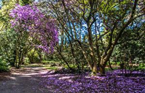 Картинка Великобритания Парки Весна Цветущие деревья Деревья Лепестки Clyne Gardens Swansea