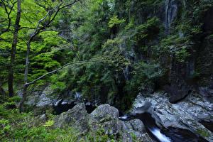 Обои Водопады Леса Скала Деревья Ручей