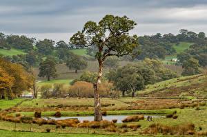 Фотографии Австралия Поля Луга Деревья Barossa Valley