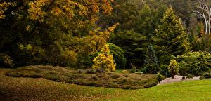 Фото Австралия Парки Осенние Деревья Кусты Ель Mount Lofty Botanic Garden Природа