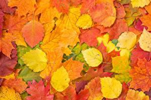 Обои Осенние Листва Природа