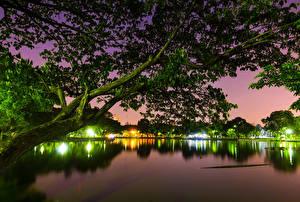 Картинка Бангкок Парки Озеро Ночные Ветки Деревья