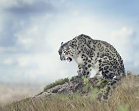 Картинки Большие кошки Барсы Зевает Животные