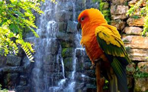 Обои Водопады Природа
