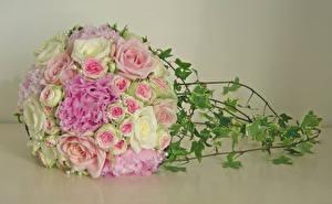 Обои Букеты Розы Пионы Цветной фон Цветы