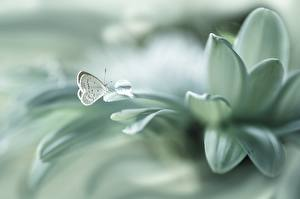 Фотографии Бабочки Вблизи Белый Лепестки Цветы