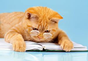 Обои Кошки Рыжий Очки Книга Лапы Смешные