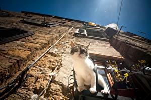 Обои Коты Здания Окно Стенка Вид снизу Животные