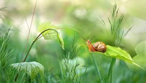 Фотографии Вблизи Улитки Растения Трава Животные Природа