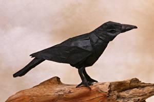 Фото Вороны Птицы Бумага Оригами