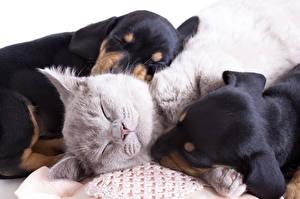Фото Собаки Коты Втроем Спит Милые Животные