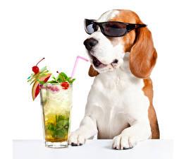 Фотографии Собаки Напитки Белый фон Стакан Очки Смешные Бигль