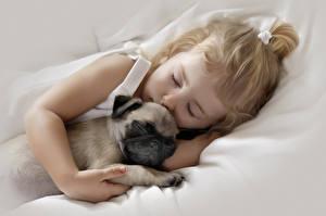 Фото Собаки Мопс 2 Спящий Девочки Миленькие Дети