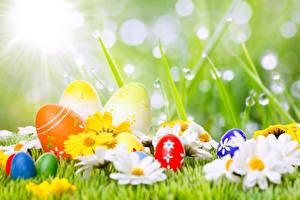 Картинки Пасха Праздники Ромашки Яйца Капли