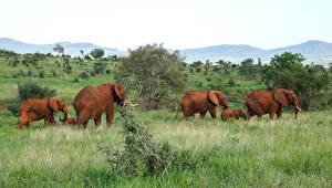 Обои Слоны Детеныши Трава