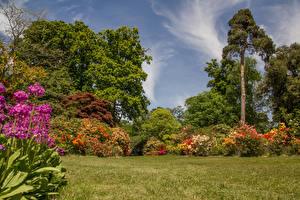 Картинки Англия Сады Кусты Деревья Трава Exbury Gardens