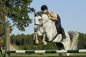Фотографии Верховая езда Лошади Прыжок Спорт Девушки