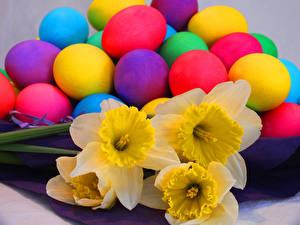 Обои Праздники Пасха Нарциссы Крупным планом Яйца Цветы