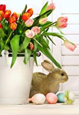 Фотография Праздники Пасха Тюльпаны Кролики Яйца Ведро Цветы