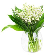 Фотографии Ландыши Белый фон Ваза Цветы