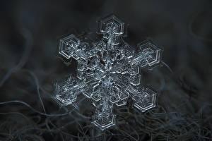 Фотография Макросъёмка Вблизи Снежинки
