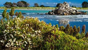 Обои Новая Зеландия Берег Ромашки Трава Lightful Shag Rock Rapanui