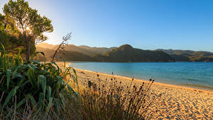 Фотография Новая Зеландия Побережье Деревья Пляж Takaka Tasman