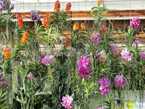 Обои Орхидеи Цветы