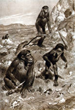 Картинки Живопись Зденек Буриан Черно белое Monkeys
