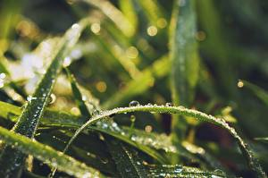 Обои Растения Вблизи Трава Капельки Зеленый Природа