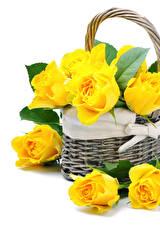 Картинка Розы Вблизи Белый фон Желтый Корзина Цветы