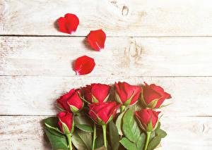 Фотография Розы Вблизи Доски Красный Лепестки Цветы