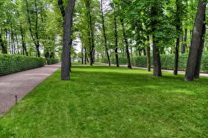 Картинки Россия Санкт-Петербург Парки Газон Деревья Summer Garden Природа